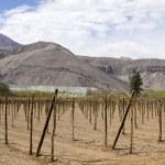 Farmland of vineyard — Stock Photo #16722735