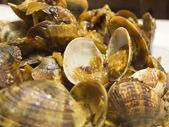 Coseup of clams in marinara sauce — Stock Photo