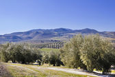 Panorama of the fields in Andalusia. — Stock Photo