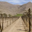 Chile - fertile valley in inhospitable mountains — Stock Photo
