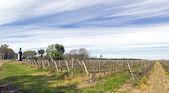 The wine walk, Uruguay — Stock Photo