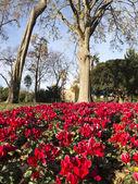 Flowery Corner Ciutadella Park. — Foto Stock