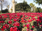 Flowery Corner Ciutadella Park. — Stock Photo
