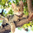 A Cat sitting on a tree — Stock Photo #13135958