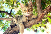 A Cat sitting on a tree — Stock Photo