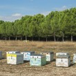 Apiary beehives in Greece - Stock Photo