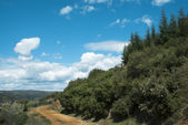 Zelené trávě pole krajina s fantastický mraky, v backgro — Stock fotografie