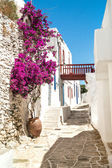 Traditional greek alley on Sifnos island, Greece — Stock Photo