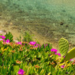 Coast of Aegean sea with blooming ice plants in Chalkidiki, Gree — Stock Photo #45868687