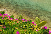 Coast of Aegean sea with blooming ice plants in Chalkidiki, Gree — Photo