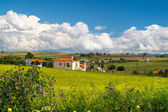 Panorama of the countryside Chalkidiki peninsula  with green fie — Zdjęcie stockowe