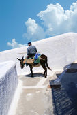осел на лестницы санторини, традиционная греческая жизнь — Стоковое фото