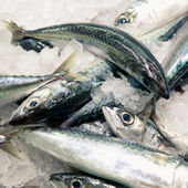 Mackerels fish at the market — Stock Photo
