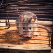 Mice caught in the cage mousetrap — Stock Photo #13659426