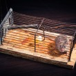 Mice caught in the cage mousetrap — Stock Photo #13659448