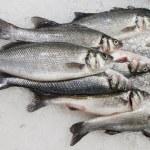 Fresh fish on ice at market — Stock Photo #14053056