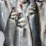 Fresh fish on ice at market — Stock Photo #14053131