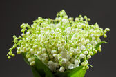 Lily of the Valley bouquet — Stock Photo