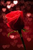 Rudá růže s bokeh srdce — Stock fotografie