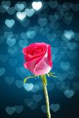 Rosa rossa con sfondo cuori blu bokeh — Foto Stock