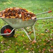 Wheelbarrow full of dried leaves — Stock Photo #21297385