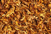 Tobacco texture — Stock Photo