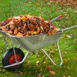 Wheelbarrow full of dried leaves - Foto Stock