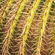 Stock Photo: Cactus thorns, closeup view