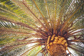 Palm tree, close-up view — Zdjęcie stockowe