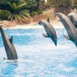 Stock Photo: Group of jumping dolphins
