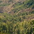 Mountain trees landscape — Stock Photo