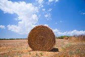 Hay bales on the field — Stock Photo