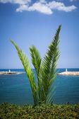 Bush palma contra el fondo del mar — Foto de Stock