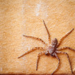 Stock Photo: Grunge cardboard background with spider