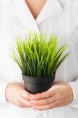 Green grass pot in hands — Stock Photo