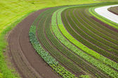 Cultivated land with vegetable patches — Stock Photo