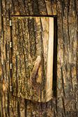 Door into the tree hive — Stock Photo