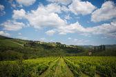 Rows of Sangiovese grapes in Tuscany, Italy — Stock Photo