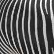 Texture of the skin of a zebra. — Stock Photo #12836521