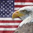 American flag and bald eagle — 图库照片