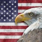 American flag and bald eagle — Stock Photo