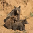 Bear looking after her cubs. — Stock Photo