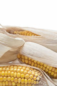 Corn ears on a white background — Stock Photo