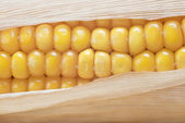 Closeup from a corn cob — Stock Photo