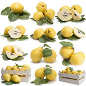 Set of photographs of quinces — Stock Photo