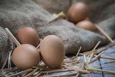 Eggs — Stock Photo