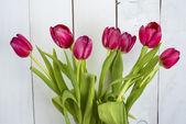 Grono tulipany — Zdjęcie stockowe
