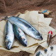 Still life about sportive fishing for mackerel — Stock Photo #45053757