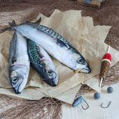 Stillleben über sportliche Fischerei auf Makrele — Stockfoto