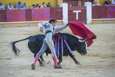 Cesar Jimenez fighting in Avila — 图库照片